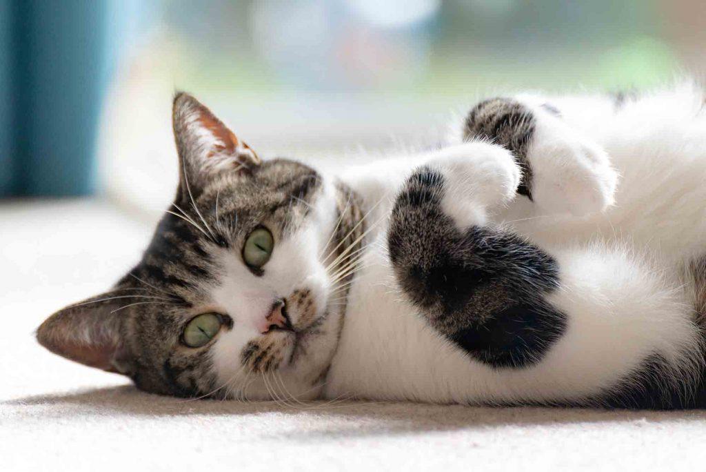 cats drool