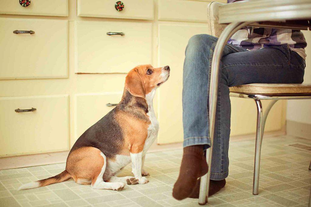 diabetes in pets