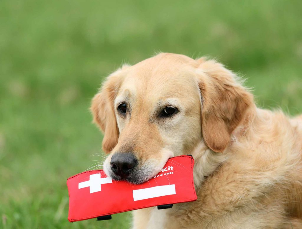 A pet first aid kit is important in a pet emergency