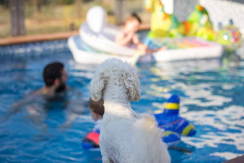 Water safety for pets makes having a pet at the pool more fun.