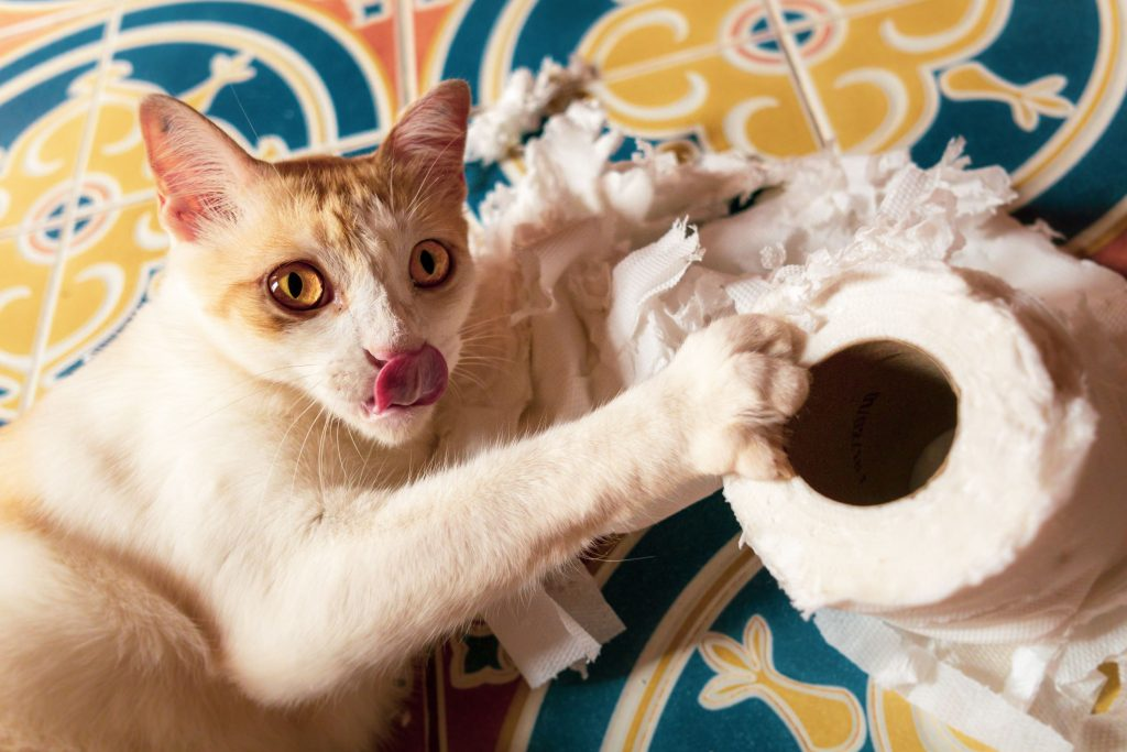 cat playing with tissue