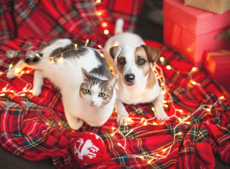 cat and dog standing around Christmas lights
