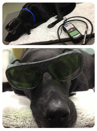 dog wearing protective eyewear